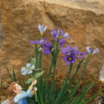 1492-Blue-Eyed-Grass-Lucerne-Periwinkle-Fairy-Small