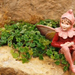 1524-Ficus-Tiny-Oak-Leaf-Red-Campion-Fairy-Small