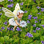 1546-Monkey-Flower-Chicory-Fairy-Small
