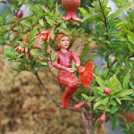 1548-Pomegranate-Dwarf-Scarlet-Pimpernel-Fairy-Small