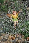 2093-Silver_Needle_Tree_Marigold_Fairy-Small