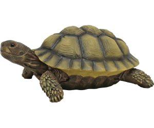 P32456 aa turtle