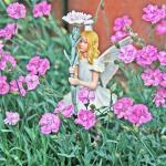 dianthus miniature