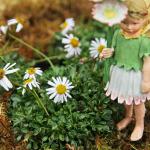 erigeron miniature
