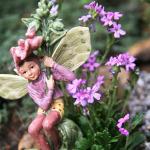 erinus miniature