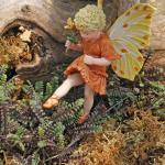 leptinella miniature