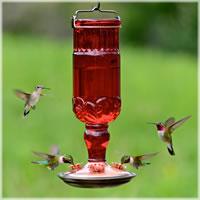 red hb feeder