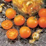 tomato sunsugar