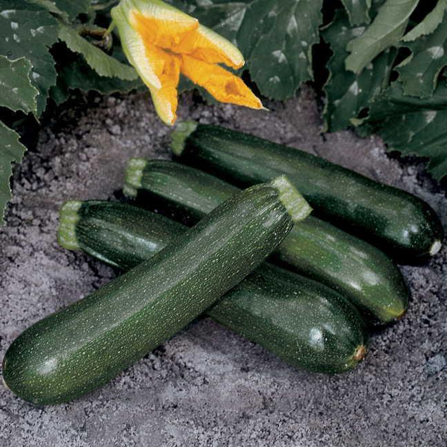 Vegetables Northgate Greenhouses