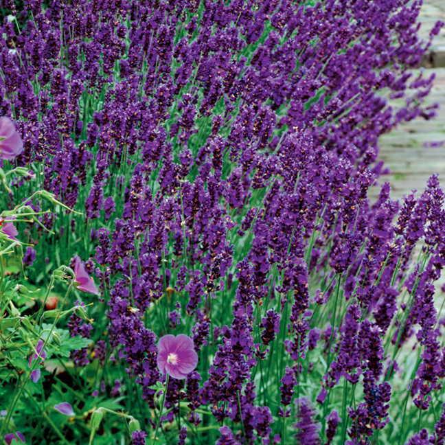 Herbs Northgate Greenhouses